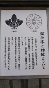 宗像大社ご神木と神紋