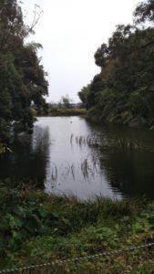 弘化谷古墳池