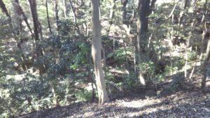 浦山公園茂み