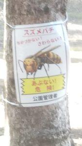 浦山公園スズメバチ