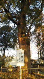 玉垂命神社御神木