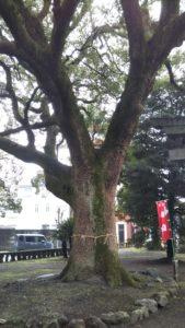 諏訪神社名木