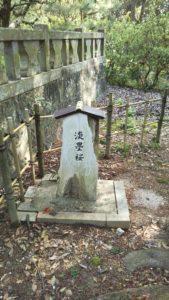 淡墨桜石碑