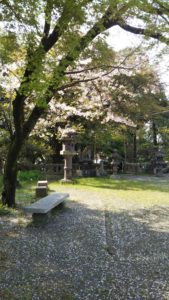本山上津天満宮桜