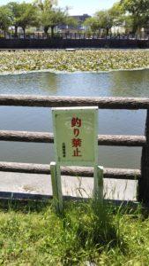 諏訪野町公園釣り禁止