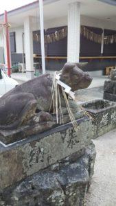 国分日吉神社牛