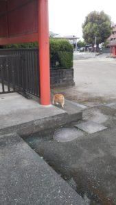 五穀神社猫