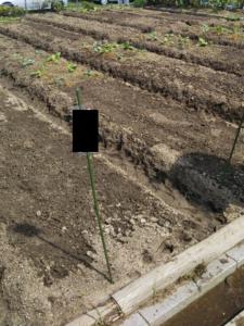 久留米ふれあい農場体験