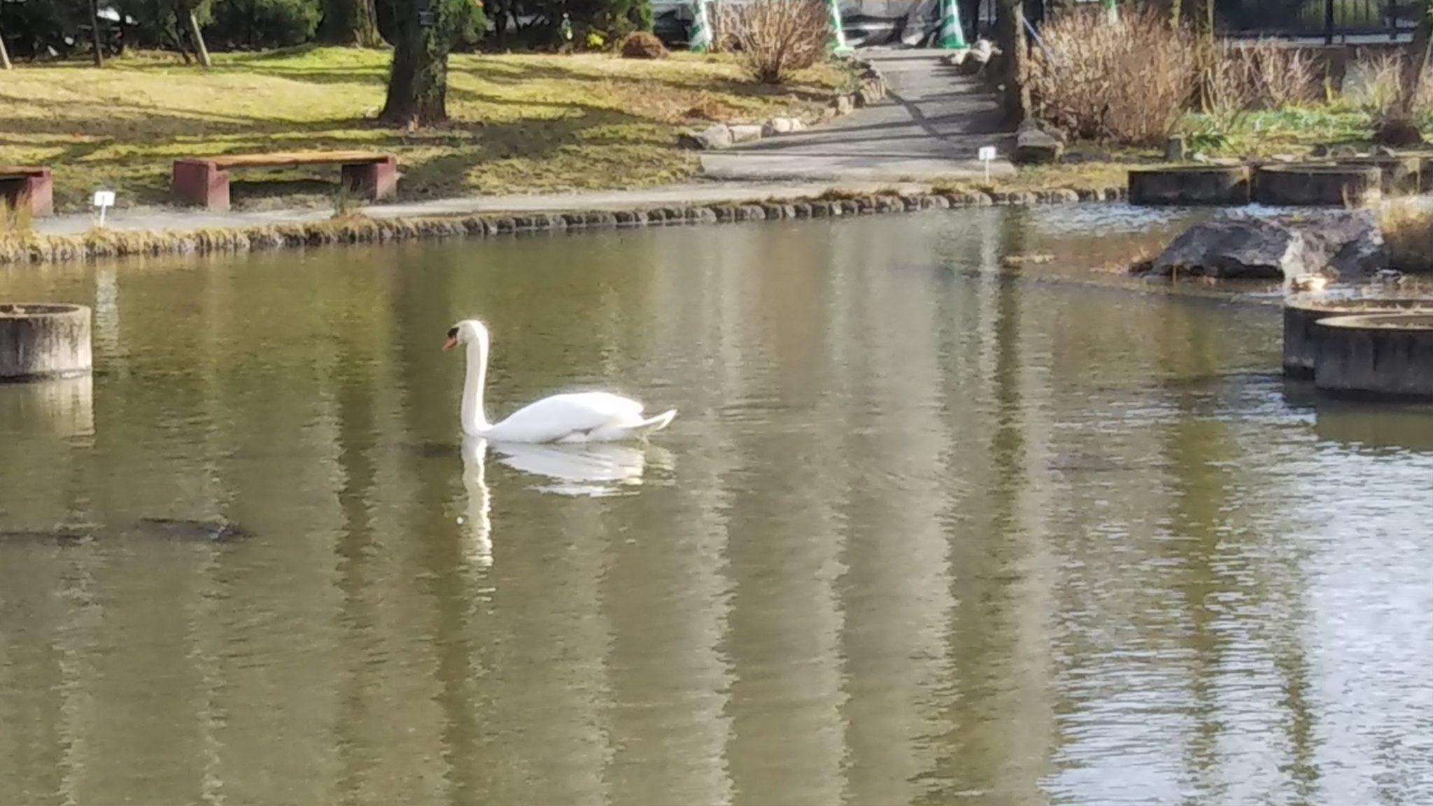 石橋文化センター白鳥